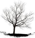 вал вишни Стоковое Фото