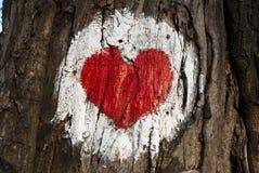 вал влюбленности Стоковая Фотография