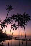 вал восхода солнца кокоса Стоковые Изображения