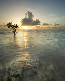вал восхода солнца мангровы Стоковые Фото