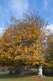 Вал в горе Urbasa с листьями осени Стоковое фото RF