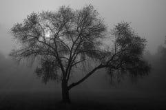 Вал в тумане Стоковое фото RF
