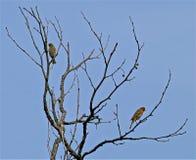 вал голубого неба птиц Стоковая Фотография