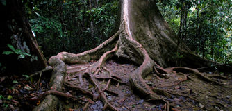 вал джунглей Стоковые Изображения RF