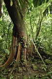 вал дождя джунглей пущи детали Амазонкы тропический Стоковое Изображение