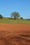 вал дуба поля осени Стоковое фото RF