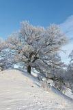 вал дуба холма Стоковое Фото