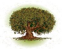 вал дуба Стоковое Изображение