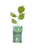 вал евро растущий Стоковая Фотография