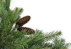 вал ели ветви Стоковые Фото