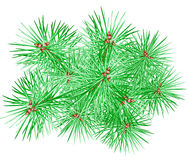 вал ели ветви иллюстрация вектора