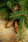 Вал ели рождества с pinecones Стоковое Фото