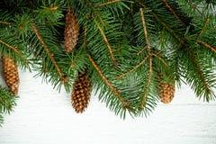 Вал ели рождества с pinecones Стоковые Изображения