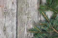 Вал ели рождества Стоковое фото RF