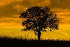 вал захода солнца дуба старый Стоковое фото RF