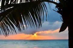вал захода солнца ладони кокоса Стоковые Фото
