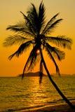 вал захода солнца ладони Стоковое Фото
