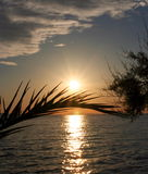 вал захода солнца ладони Стоковые Изображения