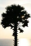 вал захода солнца силуэта ладони тропический Стоковое Изображение RF