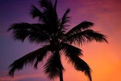 вал захода солнца силуэта ладони Стоковые Фотографии RF