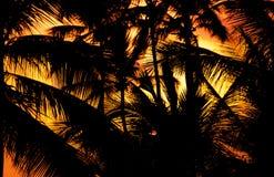 вал захода солнца силуэта ладони Стоковые Изображения RF