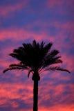 вал захода солнца силуэта ладони Стоковое фото RF