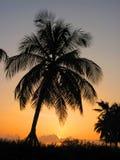 вал захода солнца силуэта ладони Стоковая Фотография RF
