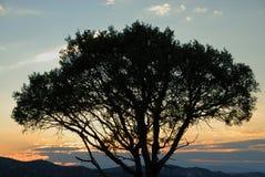 вал захода солнца силуэта Стоковые Изображения