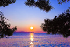 вал захода солнца сосенки ветви Стоковое Изображение