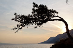 вал захода солнца сосенки Стоковая Фотография RF
