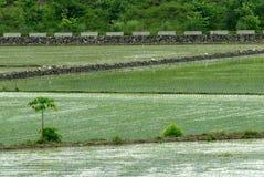 вал зеленого цвета одного фермы Стоковое Изображение RF