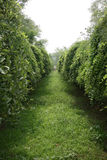 вал зеленой майны низкий молчком Стоковое Фото
