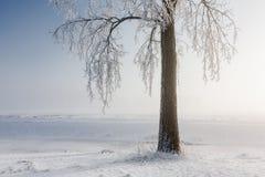 Вал зимы покрытый с hoarfrost стоковые изображения
