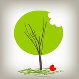 вал знания яблока Стоковая Фотография