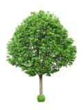 вал изолированный зеленым цветом Стоковое фото RF