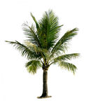 вал изолированный кокосом Стоковые Фото