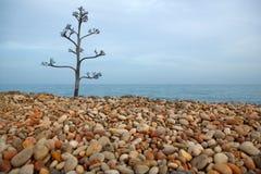 вал камня завальцовки пляжа столетника Стоковая Фотография RF
