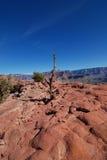 вал каньона грандиозный уединённый Стоковые Фотографии RF