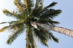вал кокоса вниз Стоковая Фотография