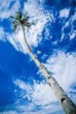 Вал кокоса и голубое небо Стоковая Фотография