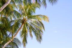 Вал кокоса на пляже Стоковое Изображение