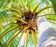 Вал кокоса на пляже Стоковое Фото