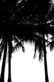 Вал кокоса силуэта Стоковые Изображения RF