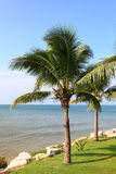 вал кокоса тропический Стоковые Фотографии RF