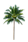 вал кокоса Стоковая Фотография RF