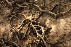 вал корня подстенка Стоковое Изображение RF