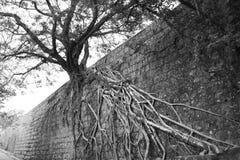 вал корня Стоковые Фото