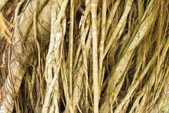 вал корня Стоковая Фотография RF