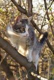 вал кота Стоковое Фото