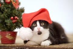 вал котенка рождества Стоковые Изображения